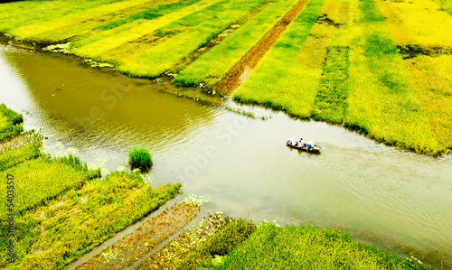 Rice field and river, NinhBinh, Vietnam