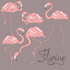 Isolated flamingos in different positions