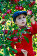 Apple orchard - Young girl picking red apples