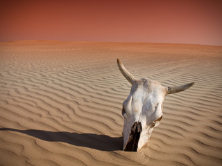 Cattle skull in the sand