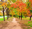beautiful colorful autumn park in sunny day, alley perspective