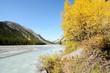 カナディアン・ロッキー 黄葉のアサバスカ川