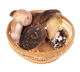 mushrooms types in basket   isolated on a white background
