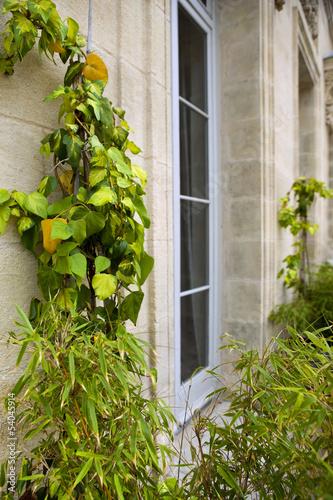 Terrasse, maison, balcon, jardin, plantes, immobilier