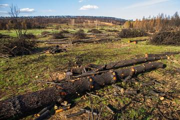 Incendio en bosque de pinos