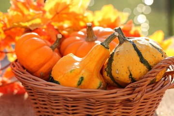 Pumpkins in basket. Defocused colorful leaves in the background.