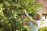 A mature woman pruning a bush