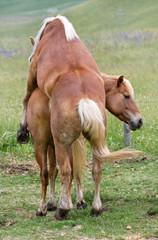Amore equino - horse sex