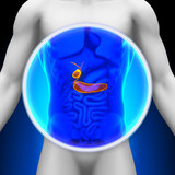 Medical X-ray Scan - Pancreas / Gallbladder