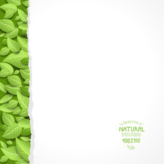 Paper sheet and  green leaves