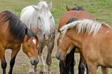 Cavalli a riposo - the rest of the horses