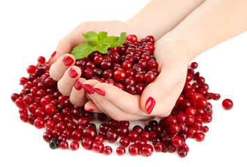 Woman hands holding ripe red cranberries, isolated on white.