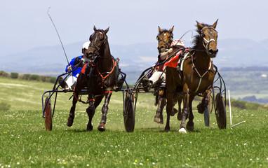 Trotting Race Synod Inn Cardigan Wales