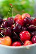 beautiful fresh cherries
