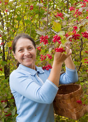 woman picking viburnum