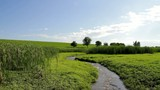 Summer Stream Flowing through Green Grass Field Travel