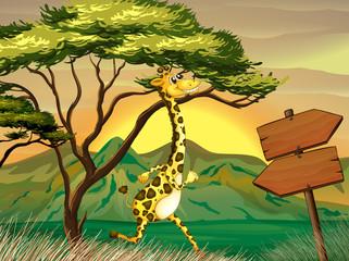 A giraffe following the wooden arrow guide