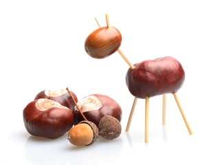 Chestnut and acorn animal on white background.