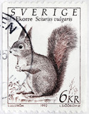 Squirrel Swedish Stamp