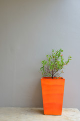 plant in orange pot with a gray mortar wall background