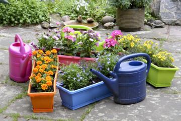 Balkonkästen bepflanzen