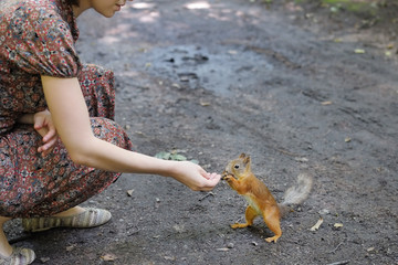 Girl feed funny little squirrel