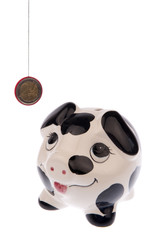 Pig looking up to Euro coin