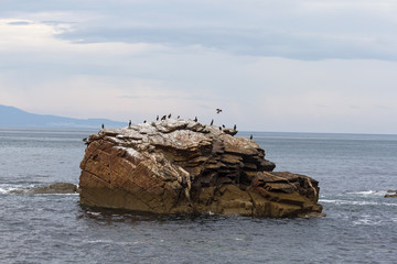 Cormoranes en isla rocosa