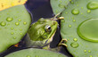 Frog on lily pad - 54086502