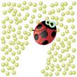coccinella mangia afidi