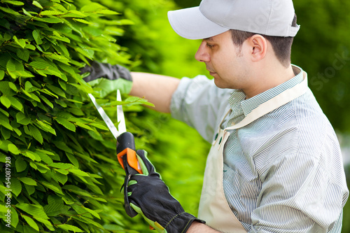 Gardener trimming plants