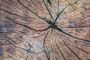 Old Weathered Cracked Tree Trunk Cross Section