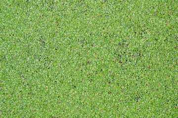 Green swamp texture