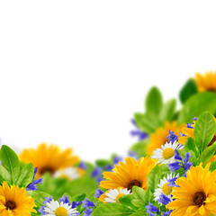 Wildflowers on the white background