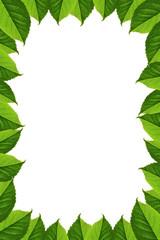Frame of green leaves