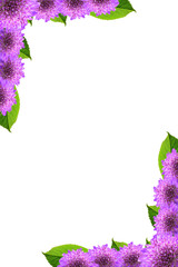 Frame of purple flowers