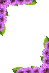 Frame of purple flowers