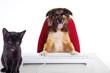 Hund ist der Boss vor Computer