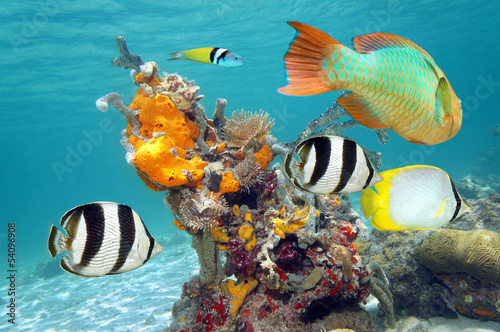 Leinwanddruck Bild Vibrant colors of marine life
