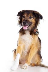 Hund mit Verletzung beim Tierarzt