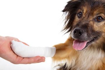 Hund mit Verletzung an Pfote beim Tierarzt