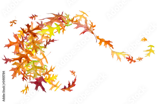 Autumn Leaves Swirl isolated on white