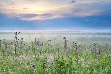 wildflowers on meadow at misty sunrise