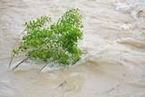 green trees of Elm and Hazel immersed in mud overflown river wat