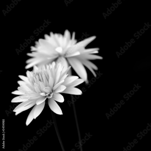 black and white flower couple