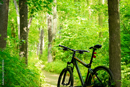 Mountain Bike on the Trail in the Forest