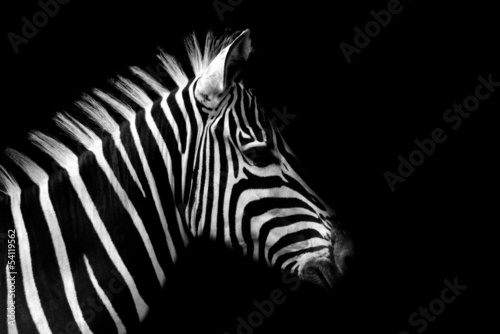 Deurstickers Zebra Zebra
