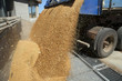 Dumping of wheat grains