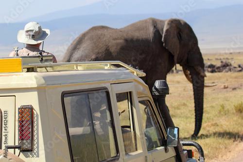 Fotobehang Olifant African elephant near a vehicle