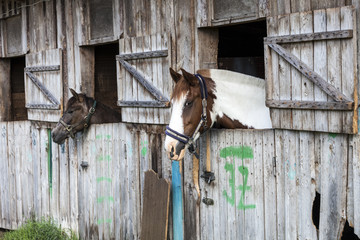 Two horses in stable